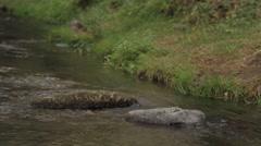 Landscape, Beautiful Creek, Rock Stock Footage