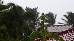 Bad Weather in Tropics. Wet Houses and Palm Trees. Stock Footage