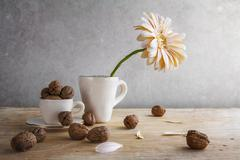 still life white gerbera cup walnuts - stock photo