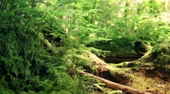 Forest Floor In Summer Stock Footage