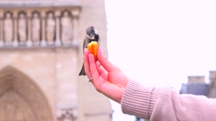 Birds feed from a young girls hand in front of Notre Dame cathedral in paris. Stock Footage