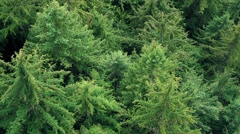 Flying Over Tree Tops Stock Footage