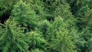Stock Video Footage of Flying Over Tree Tops