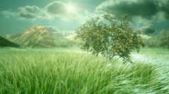 Heavenly and Cinematic Nature Scene - stock footage
