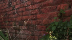 Spider in web - stock footage