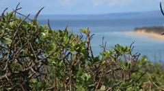 Coastal plant life Stock Footage