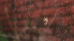 Spider in web in morning dew Stock Footage