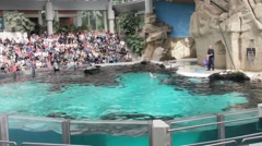 Dolphins water show in Duisburg Zoo. Germany. Play with hoops Stock Footage