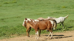 Horses in Cades Cove 3 Stock Footage