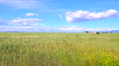 Beautiful vast open fields of waving grain. Stock Footage