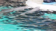 Dolphins water show in Duisburg Zoo. Germany Stock Footage