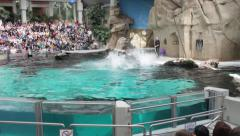 Water show with dolphins. Jumping over water - stock footage