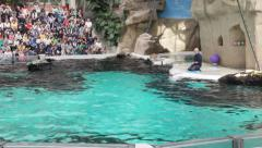 Dolphins water show in Duisburg Zoo. Germany - stock footage
