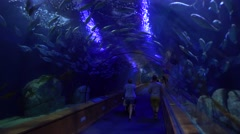 People walk through an underwater tunnel in an aquarium display. Stock Footage