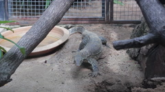 A monitor lizard in Zoo  Stock Footage