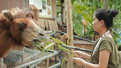 Feeding Camel Stock Footage