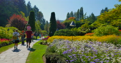 4K Butchart Gardens, Inside the Sunken Gardens, Pan of Flowers Stock Footage