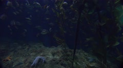 Beautiful underwater scenes around a coral reef. Stock Footage