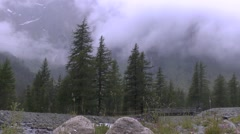 Low-Lying Clouds Behind Alpine Trees - stock footage