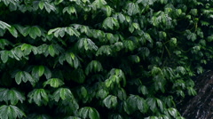 Green plants in the tropical zone, slow motion shot Stock Footage