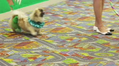 Jumping smart dog Stock Footage