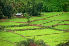 green terraced rice field, thailand - stock photo