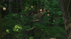 Deer in Woods - Walking in the Background Stock Footage