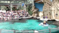 Dolphin towing a boat with a boy at water show in Duisburg Zoo Stock Footage