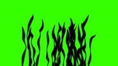 Algae Sea silhouette on Green Screen 25fps Stock Footage