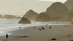 Seagulls Stinson Beach California Stock Footage