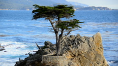 Lone Cypress Tree - Pebble Beach Monterey California Stock Footage