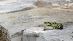 Garden Pond Frog Jump A Stock Footage