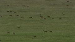 Mongolia Aerial Footage Stock Footage