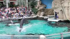 Water show with dolphins. Vertical swimming on tail - stock footage