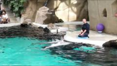 Dolphins applauding  at water show in Duisburg Zoo. Germany Stock Footage