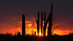 Brilliant Sky Color Arizona Sunset Silhouetted Cactus Time Lapse Stock Footage