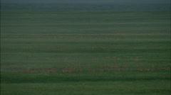 Aerial Mongolia Plains Gazelle Stock Footage