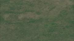 Aerial Mongolia Plains Gazelle - stock footage