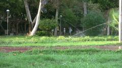 Grass Sprinkler watering Stock Footage
