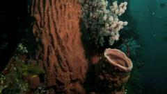 Large barrel sponge and soft corals underwater Stock Footage