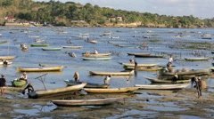 Seaweed farmers working their plots at low tide - stock footage