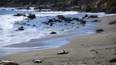Elephant Seal Beach -  San Simeon California Stock Footage