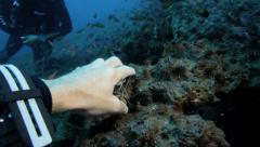 Scuba diver has his hand cleaned by white banded cleaner shrimp Stock Footage