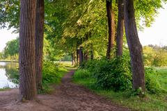 Trail between the trees leads to a beautiful lake Stock Photos