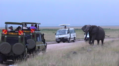ELEPHANTS AFRICAN WILDLIFE, tourists in car Stock Footage
