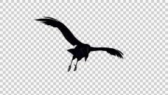 Flying Black Bird, Crow, Raven - 02 - Loop - Alpha - stock footage