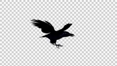 Flying Black Bird, Crow, Raven - 01 - Loop - Alpha Stock Footage