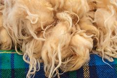 pile of fresh sheep wool on a tweed cloth - stock photo