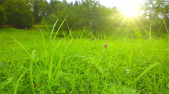 green grass on a background sunset - stock footage