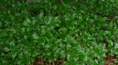 Holly bed 4k - stock footage